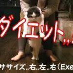 ネロちゃんのダイエット挑戦?【Diet of the Cat】