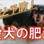 【肥満】愛犬の肥満症について解説!ダイエットの重要性、ダイエット方法もお伝えします^^