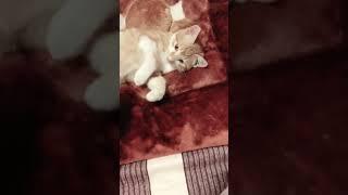 美白滤镜=v=橘猫