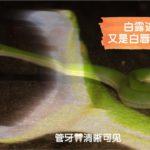 【白露进山|偶遇超美白唇竹叶青】听说白露到了,蛇类横行,那就去偶遇吧!又是白唇竹叶青!