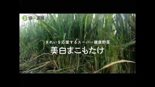 備中農園「美白まこもたけ」紹介VTR